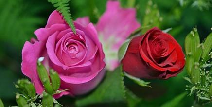 זר ורדים